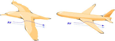 A bird and an airplane compared